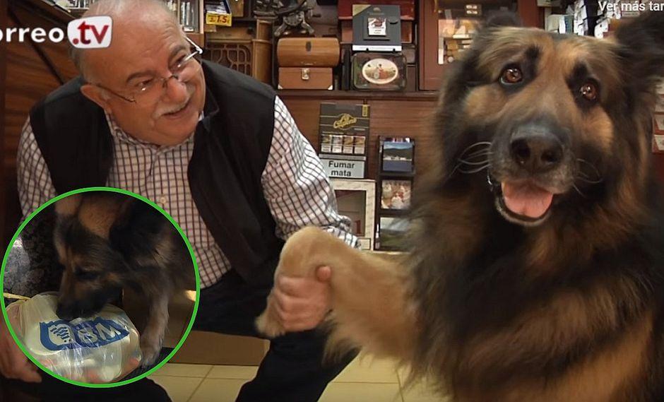 Drum, el perrito que aprendió a hacer los recados para su dueño (VIDEO)