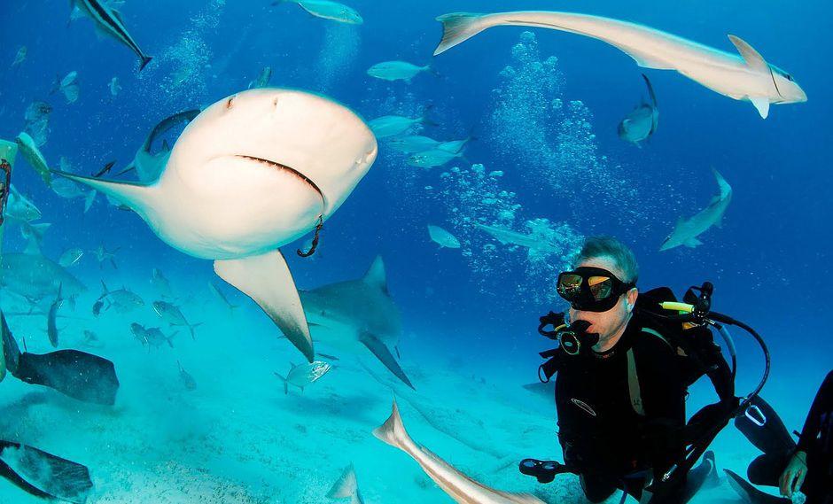 Estudio demuestra que los tiburones valen mucho más vivos que muertos