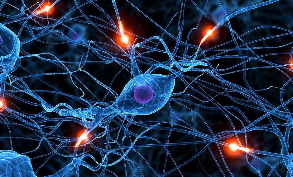 Científicos crean neuronas y las usarán para reparar daños en médula