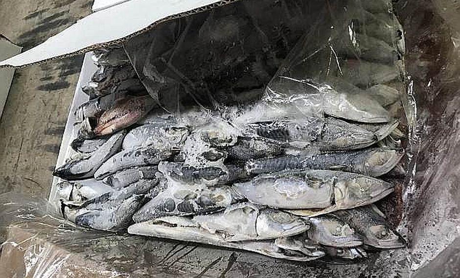 Nuestro pescado peruano hace noticia en Australia pero por mala razón (FOTOS)
