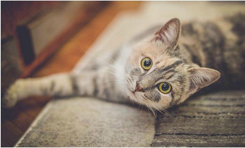 4 cosas que debes hacer si tu gato te ataca