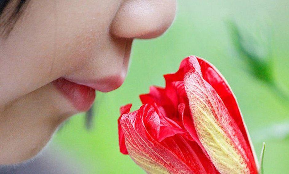 Sentido del olfato: entérate cuántas partes tiene