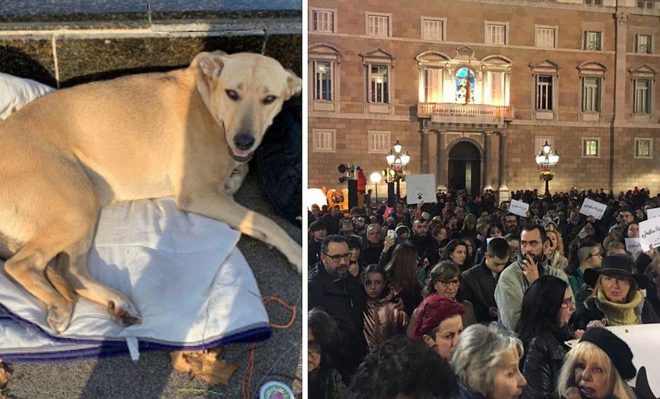 Revuelo por policía que disparó a una perrita callejera en España (FOTOS)