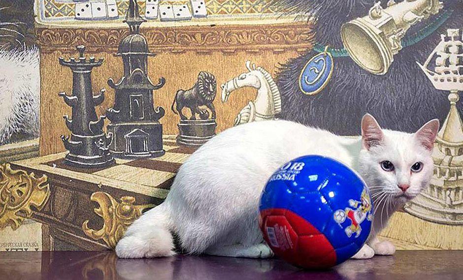 Gato sordo Aquiles hará de adivino en el Mundial Rusia 2018