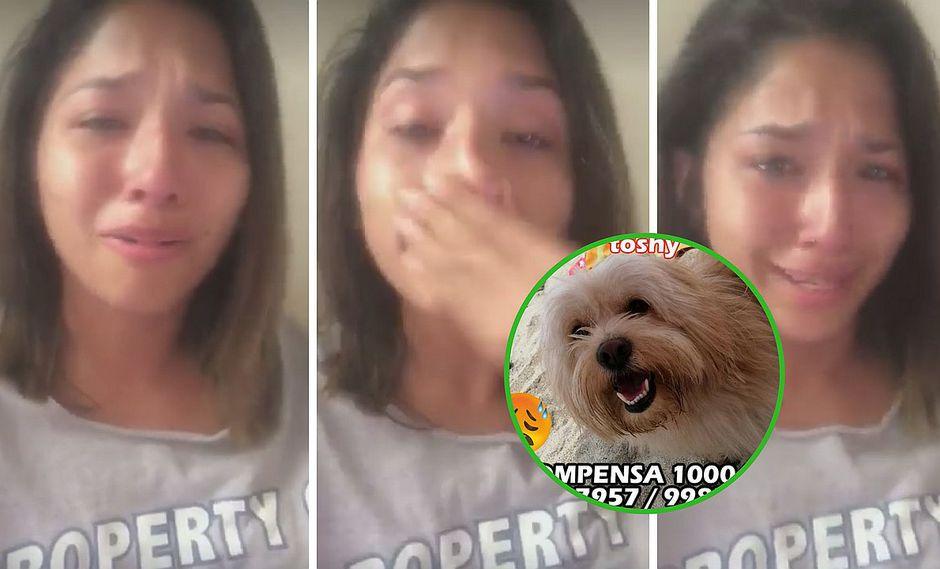 Jovencita graba conmovedor vídeo donde llora por su perrito perdido